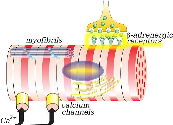 receptor-definition